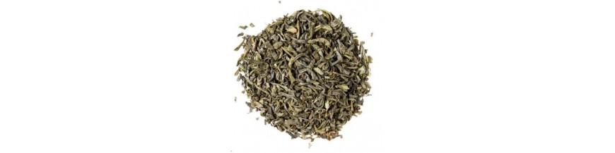 hojas de té en el sahara